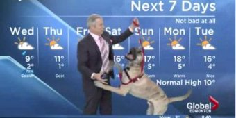 Watch: TV weatherman struggles with playful dog [VIDEO]
