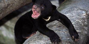 Bear cub takes a stroll through Oregon drug store