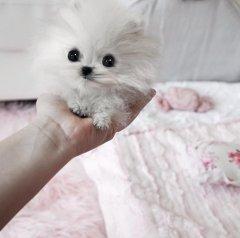 Paris Hilton has a ridiculously tiny $13K dog