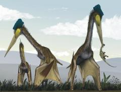 Toothless 'dragon' pterosaurs filled late Cretaceous skies