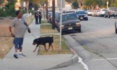 California police kills dog after arresting owner for shooting video