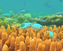 Climate change may drive fish species from Earth's equatorial regions