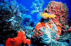 Cuts in CO2 emissions said necessary to save world's coral reefs