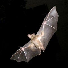 200 bats invade Danish woman's home
