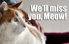 39-pound cat dies of respiratory problems