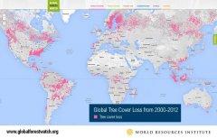 Google offers bird's-eye view of global deforestation