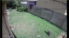 Tiny guard dog chases off suspected burglar