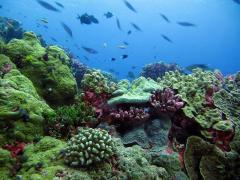 Fish can smell a bad coral reef