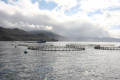 Fish farms in coastal waters environmentally safe, U.S. report says