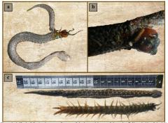 Centipede and viper eat each other to death in Macedonia