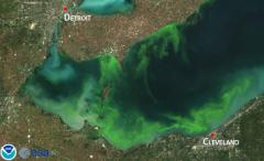 Lake Erie shores besieged by algae bloom, will get worse NOAA says