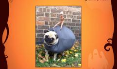 Pug dressed as Miley Cyrus' 'Wrecking Ball' goes viral