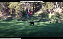 Bear cub spins in circles on golf course [VIDEO]