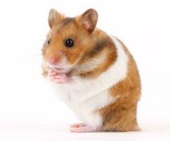 Police: Hamster killed in retaliation