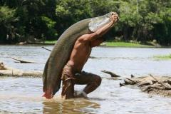 Giant Amazonian fish now 'locally extinct' in many areas