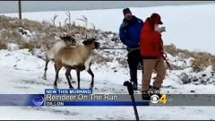Reindeer recovered after escaping from Santa during lighting ceremony