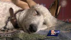 Boston bombing survivor, service dog asked to leave T.J. Maxx