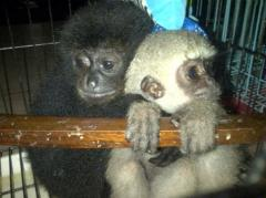 Indonesia makes arrest in case of smuggling protected wildlife