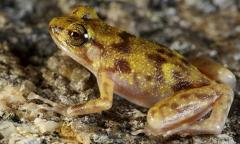 Gecko, lizard and frog among new species from Australian 'lost world'