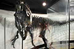 Creation Museum touts new dino skeleton as proof of Biblical flood