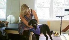 Aimee Copeland gets service labradoodle