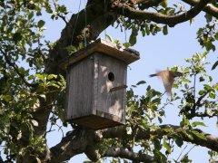 Archbishop sends bird houses to churches