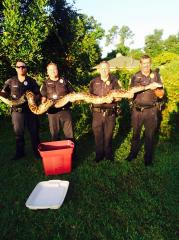 Florida police discover well-fed 12-foot python after residents complain of missing cats
