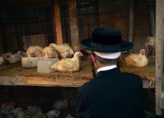 Mass. firefighter poisoned neighbors chickens for 'mocking' him