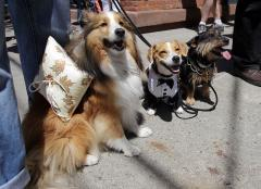 Pets and their owners -- look alike, act alike