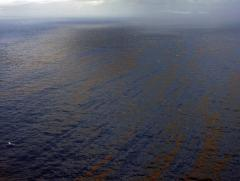 Gulf coast isn't clean, NWF says