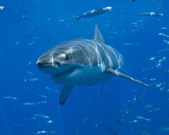 Teen bitten by shark off Delaware beach