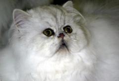Cat's resistance to flea bath hospitalizes owner