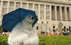 Russian expedition tags polar bears
