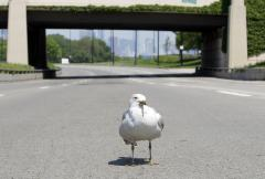 Seagulls attack Scottish mail carrier