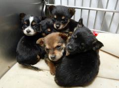Puppy mills and pet stores under a microscope
