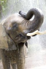 Conservationists say elephants need stronger protections