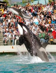 PETA buys deflated SeaWorld stock to force release of whales