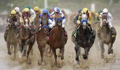 A Look At the Derby Horses