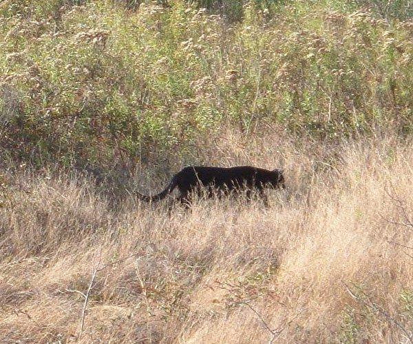 Black Cat New Orleans