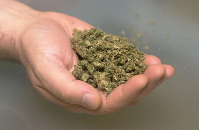 marijuana in detail essay Arguments for an essay or speech about why marijuana should be legal start here if you are writing a research paper or report about marijuana are you writing an essay or working on a speech or presentation about why marijuana should be legal if so, this page is for you we get a lot of requests.