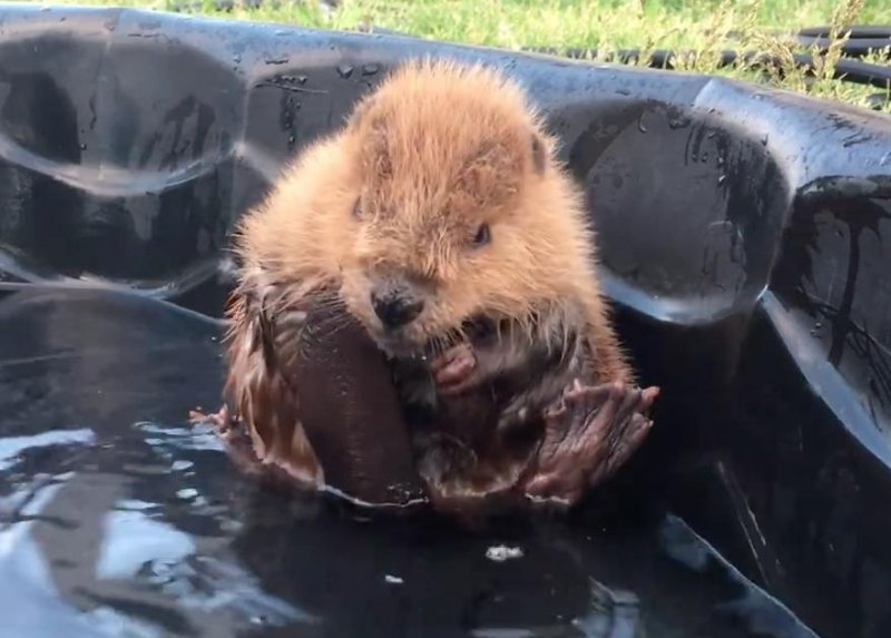 kitchen kompact chadwood cabinets