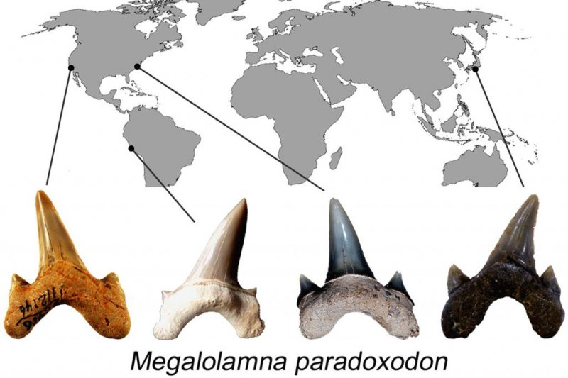 a study of shark families The study, an early chondrichthyan and the evolutionary assembly of a shark body plan, was published january 3, 2018, in the proceedings of the royal society b additional authors include john finarelli from university college dublin, ireland ivan sansom and plamen andreev from the university of birmingham, united kingdom katherine criswell from cambridge university, united kingdom and.