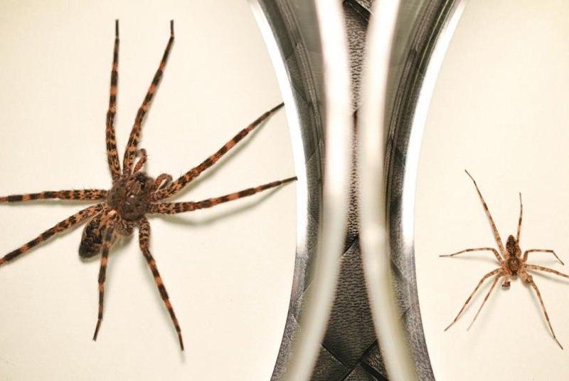 spider dies male dark fishing