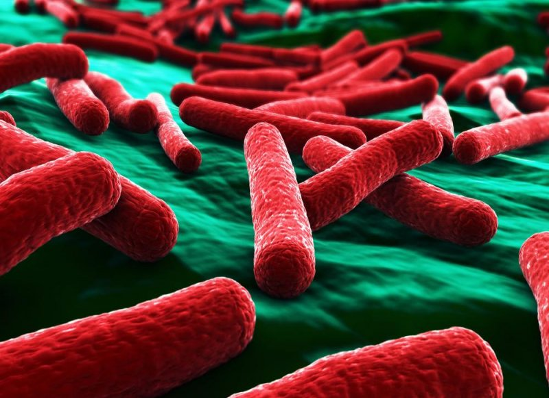 material e coli