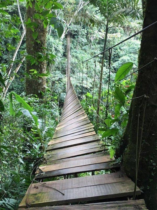 suspension bridge in colombia snaps killing 8 upi