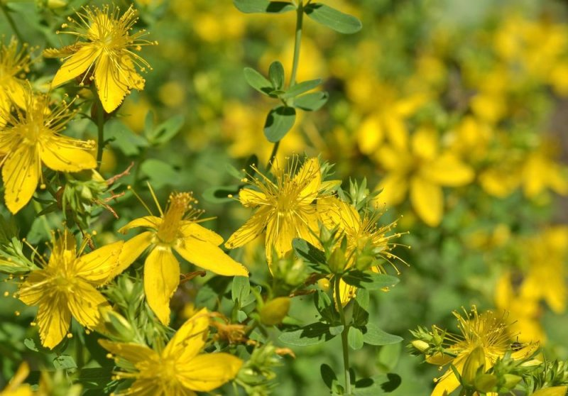 a debate over prozac and st johns wort I was only speculating that st johns wort could possibly have similar effects because i also read that prozac and st john's wort are very similar compounds over the past 6 months i have been experiencing problems with insomnia, headaches, anxiety, anger, aggression, and fatigue.