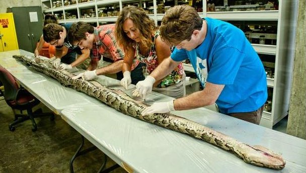 Record-size python in ...