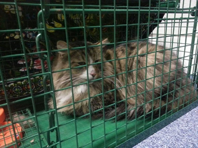 cat missing for a year found living in pet food warehouse. Black Bedroom Furniture Sets. Home Design Ideas