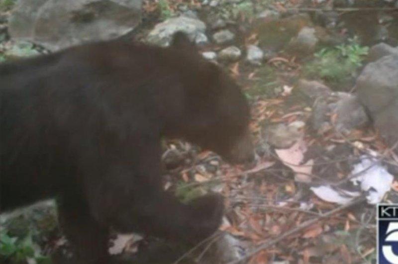 Rare sighting of black bear in Malibu Creek State Park