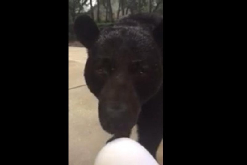 Florida woman finds herself face-to-face with bear